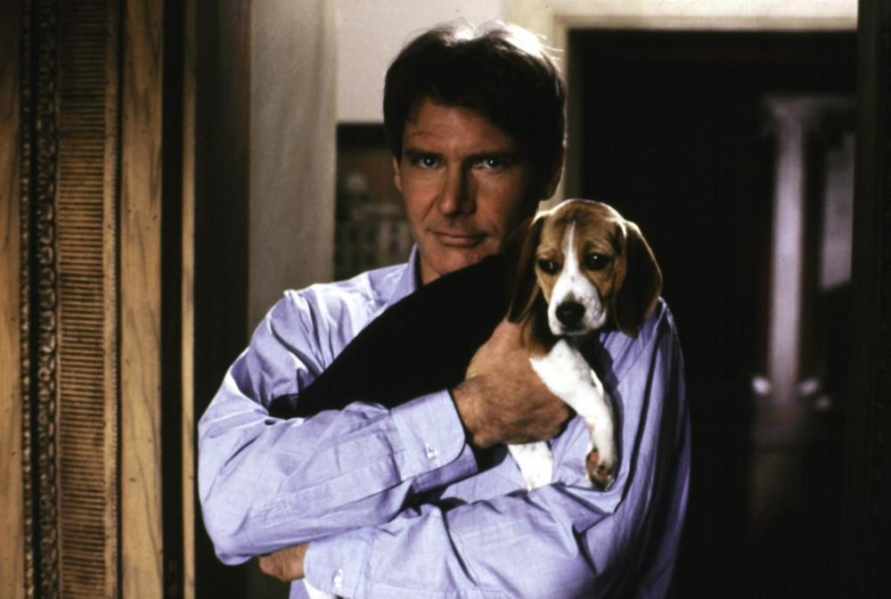 Regarding Henry and puppie