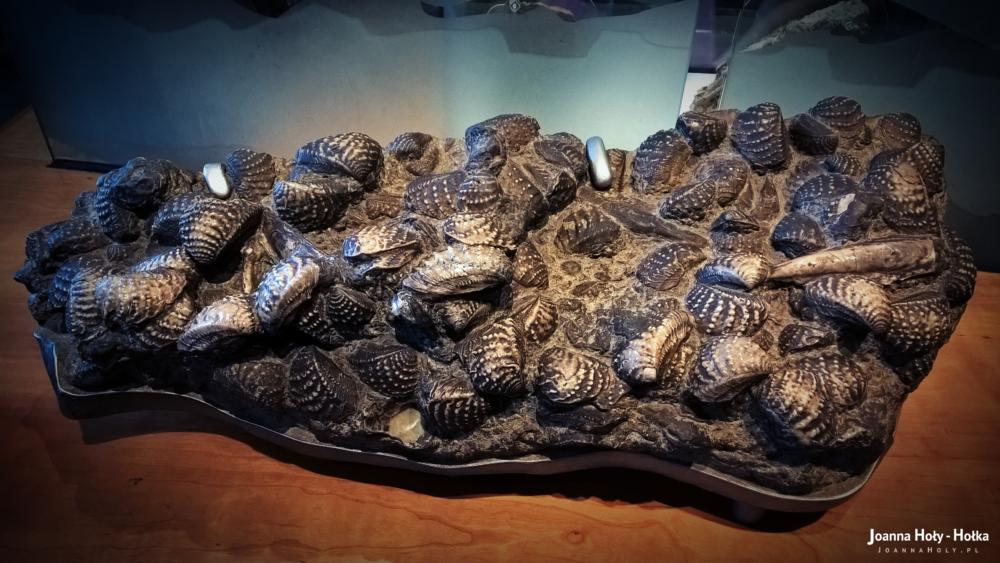 Natural History Museum - Shells