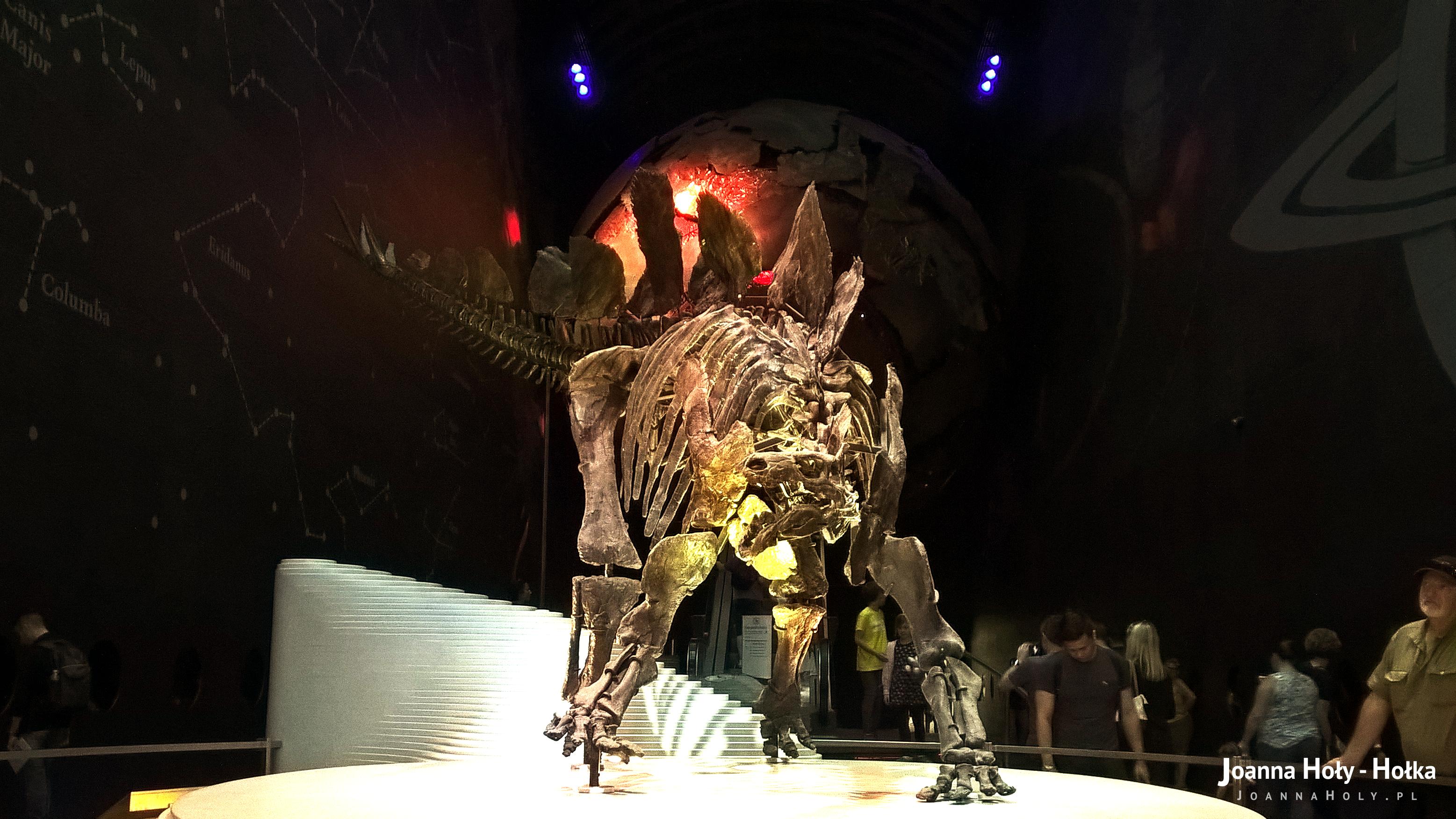 Natural History Museum - Stegosaurus