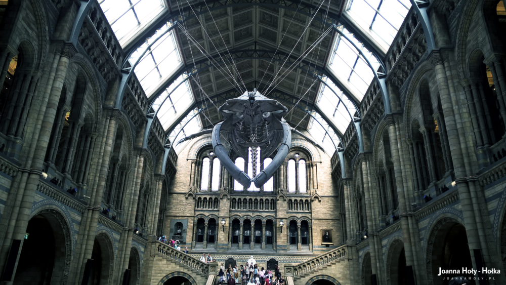 Natural History Museum - Whale front