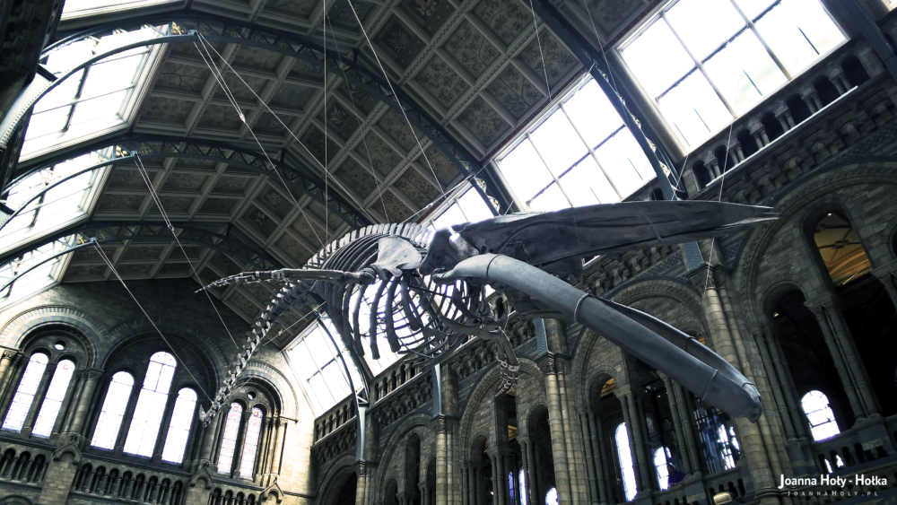 Natural History Museum - Whale right bottom