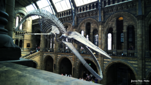 Natural History Museum - Whale right top
