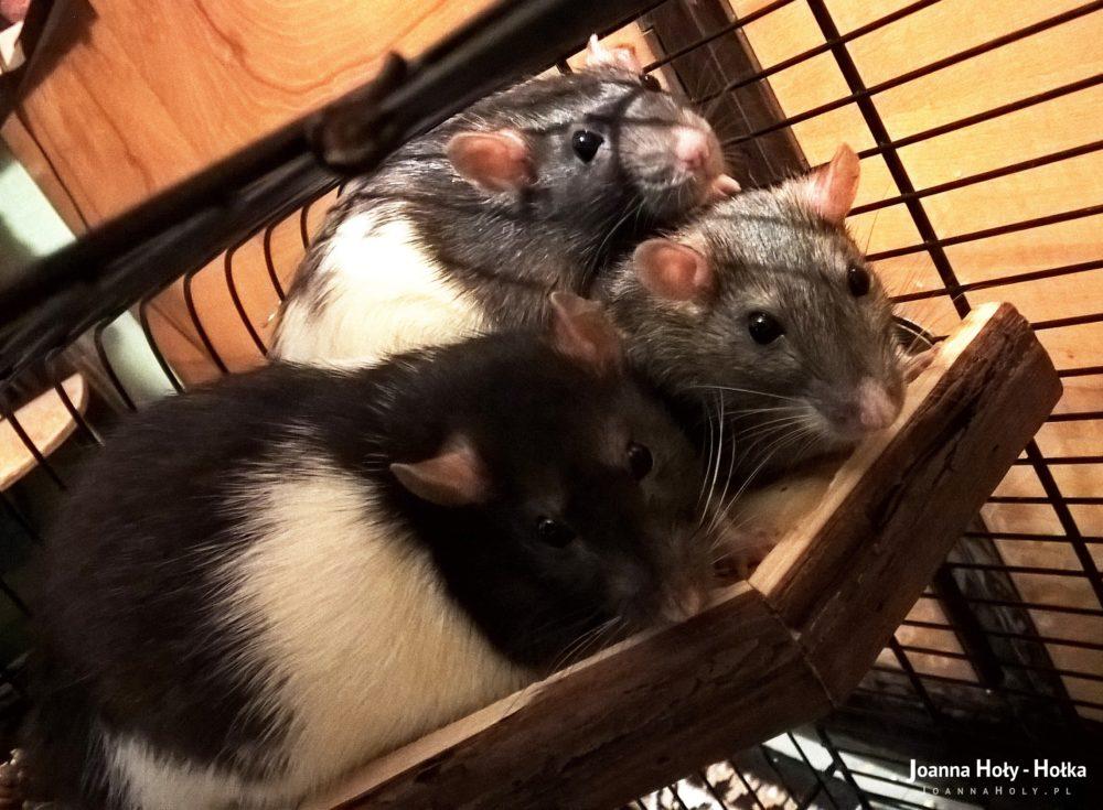 Trzpiotka, Mysza i Kropka